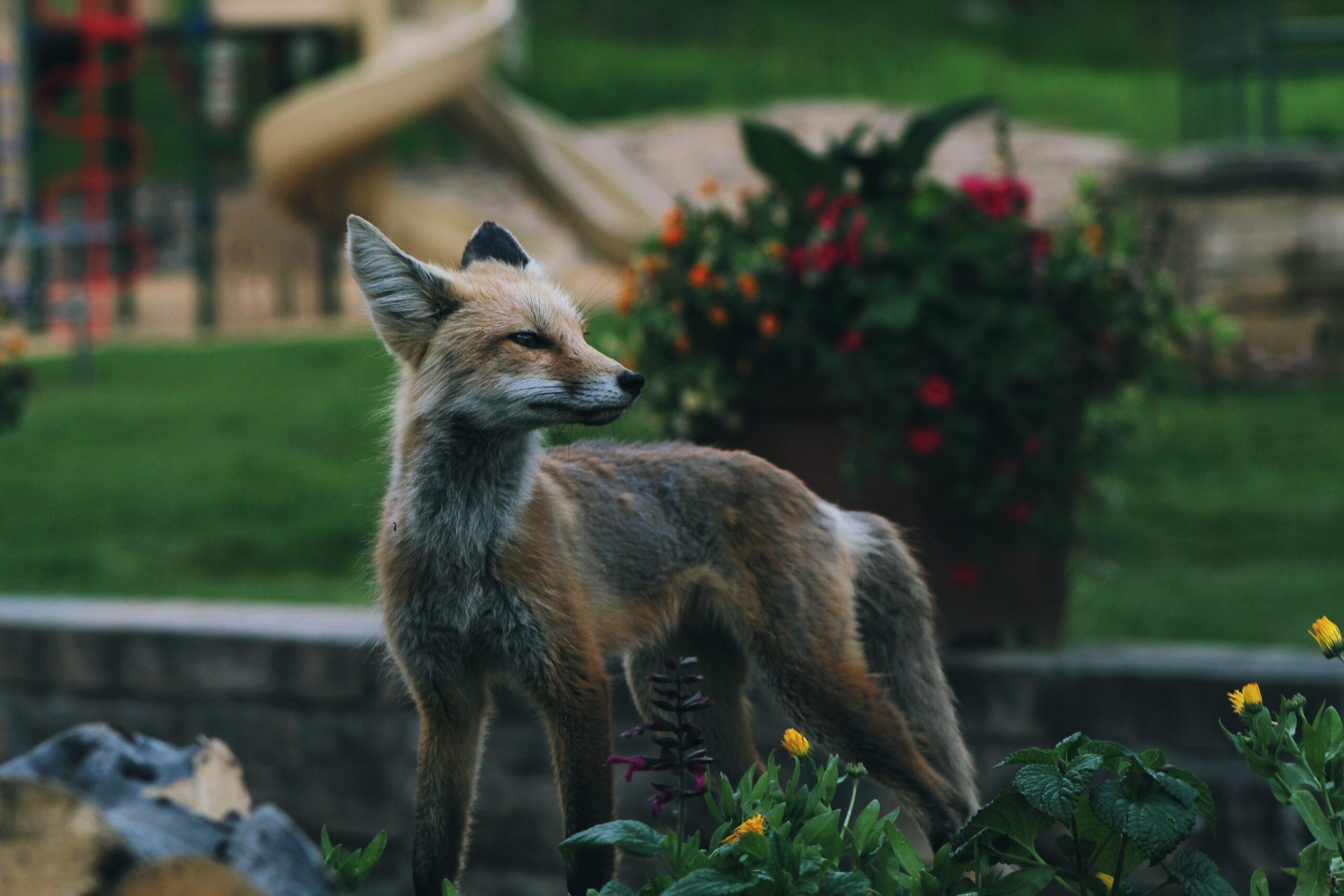 Delitos contra la Fauna silvestre (I)