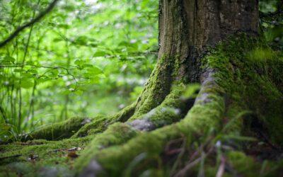 ¿Qué se entiende por daños sustanciales y perjuicio grave en los delitos contra el medioambiente?